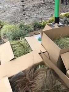 高知市西塚ノ原のパン屋さんお庭に植える植栽の種類の画像|高知市注文住宅SAI