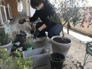 たくさんの鉢を並べ植物たちの配置を考える西村|高知市注文住宅SAI